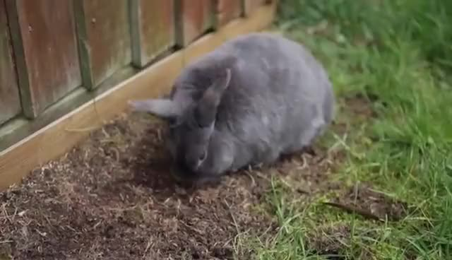 Watch bun roll 3 GIF on Gfycat. Discover more bunny GIFs on Gfycat