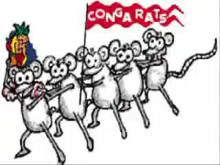 Conga Rats!! GIFs