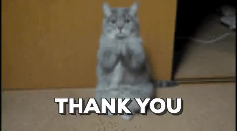 Thank You Thanks Cat GIF