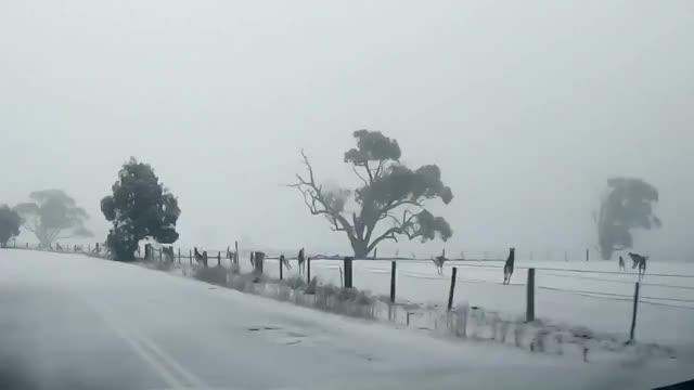 Watch and share Kangaroo GIFs on Gfycat