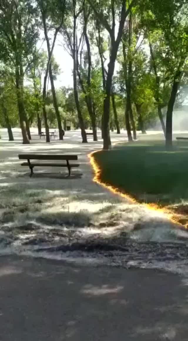 Watch and share Pollen Fluff Burning GIFs by xxiserenaixx on Gfycat