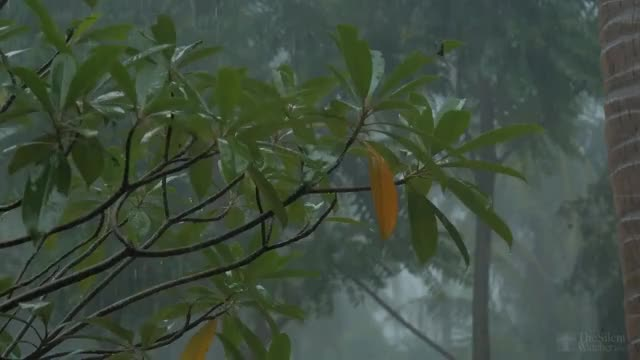 Watch and share 4K Tropical Rain & Relaxing Nature Sounds - Ultra HD Nature Video - Sleep/ Relax/ Study/ Meditate GIFs on Gfycat