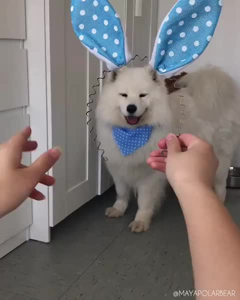 Watch and share Bunny GIFs and Dog GIFs by vani  on Gfycat