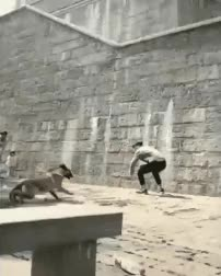 Watch Acrobatics GIF on Gfycat. Discover more related GIFs on Gfycat