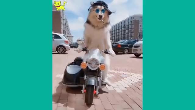 Watch Gatti e cani pazzi garantiti per farti ridere ✪ Prova a non ridere 38 GIF on Gfycat. Discover more related GIFs on Gfycat