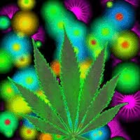 Watch pot GIF on Gfycat. Discover more related GIFs on Gfycat