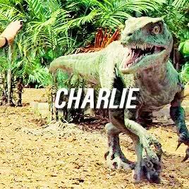 Watch Jurassic World GIF on Gfycat. Discover more Claire Dearing, Gray Mitchell, Jurassic world, Owen Grady, Zach Mitchell, indominus rex, raptors, trex GIFs on Gfycat