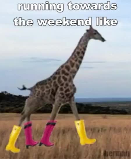 Watch and share Giraffe GIFs and Weekend GIFs by Reactions on Gfycat