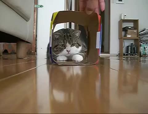 Watch Maru 4 GIF on Gfycat. Discover more Maru GIFs on Gfycat
