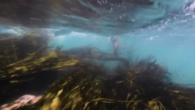 Watch and share Diving With A Marine Otter (Lontra Felina) GIFs by Pardusco on Gfycat