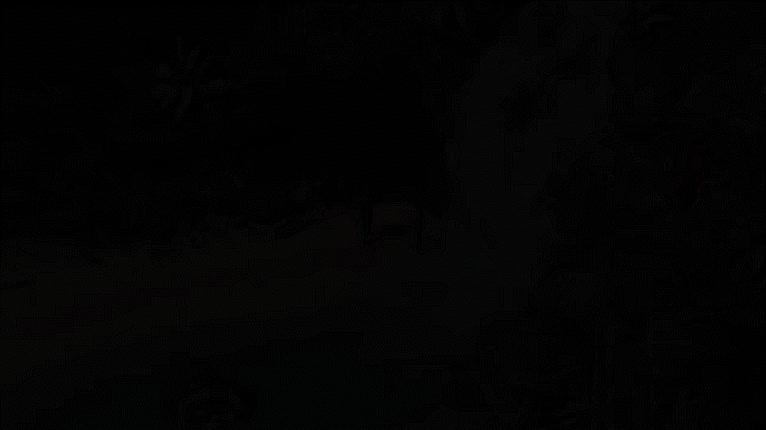 POE2, Pillars of Eternity 2: Deadfire - Environments GIFs