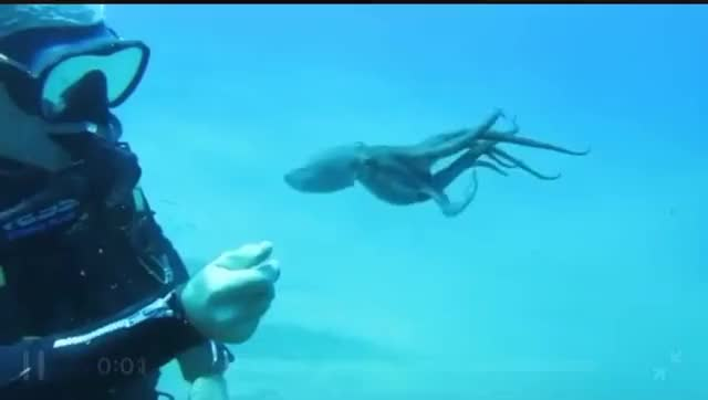 Watch and share Scuba Diving GIFs by khrime on Gfycat