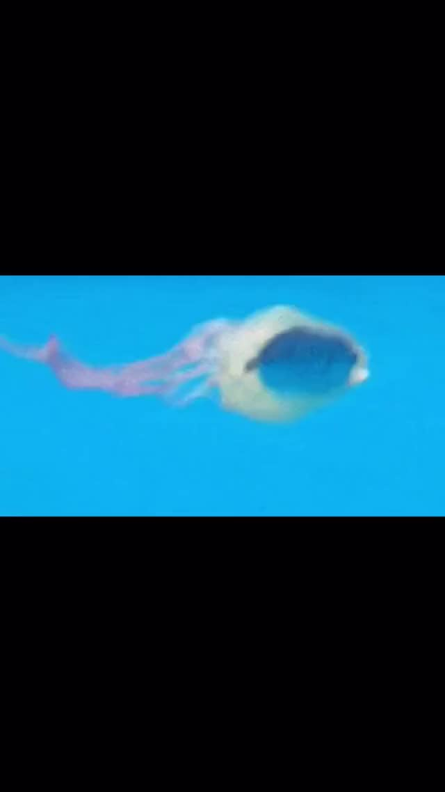 Watch and share Jellyfish: I Seem To Be Speeding. GIFs by TikTok on Gfycat