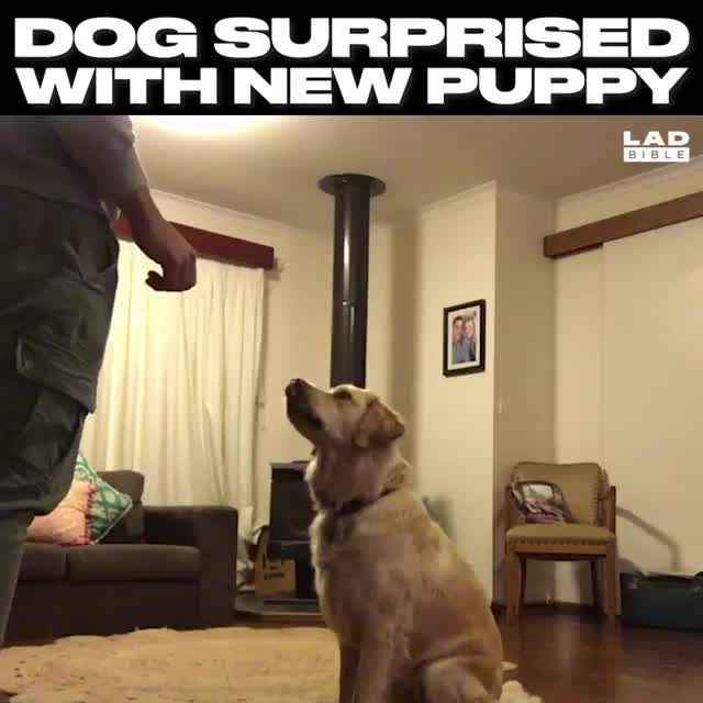 Watch This dog's reaction is the best thing ever 😍 GIF by Nomorefoxgiven (@nomorefoxgiven) on Gfycat. Discover more related GIFs on Gfycat