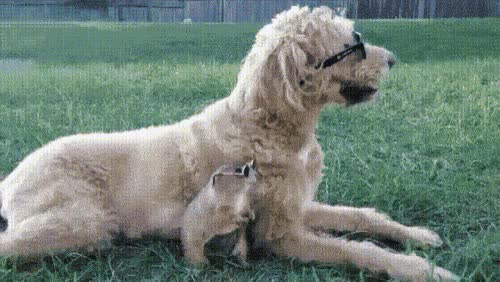 Watch Puppy sunglasses GIF on Gfycat. Discover more related GIFs on Gfycat