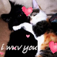 Watch and share Icon I Wuv You Hugging Kitten With Hearts Kittens Kitties Cute Cats Darling Hearts Love Loving Cat Kitten Calico Black Tabby GIFs on Gfycat