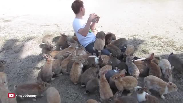 Watch Guy Gets Smothered by Bunnies on Japan's Rabbit Island! GIF on Gfycat. Discover more PeopleFuckingDying, bunny, rabbit GIFs on Gfycat