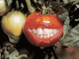 Watch 🍅 tomato GIF on Gfycat. Discover more related GIFs on Gfycat