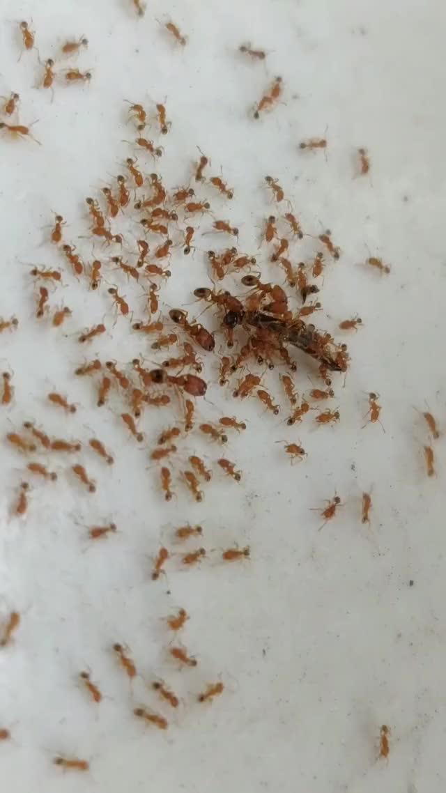 Watch and share Ants GIFs by plafond_chiffon on Gfycat