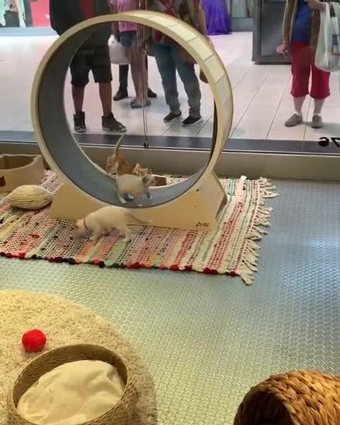 aww, cat, cats, cute, kitten, kittens, Kittens on a running wheel GIFs