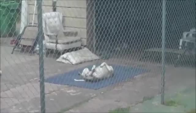 dog, pitbull, snow, tree, Came in like a wrecking ball GIFs