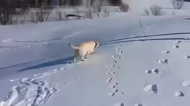 Eyebleach, aww, eyebleach, Dog's snowy slide (reddit) GIFs
