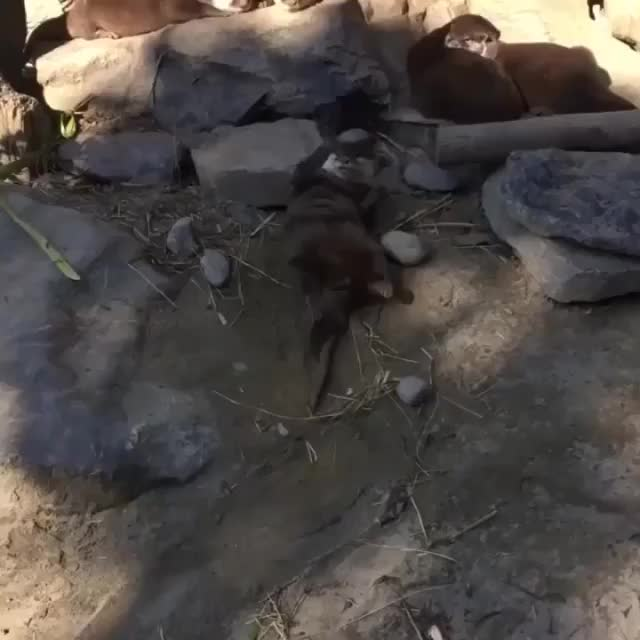 Watch and share Explorepage GIFs and Otterlove GIFs by vani  on Gfycat