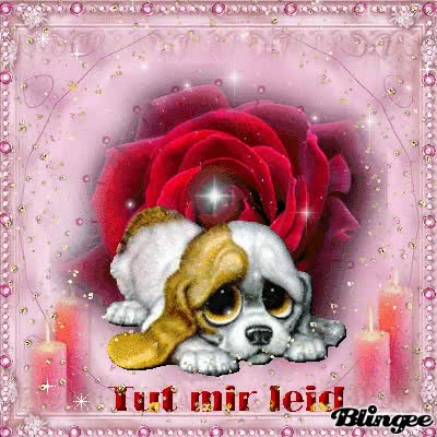 Watch es tut mir leid GIF on Gfycat. Discover more related GIFs on Gfycat