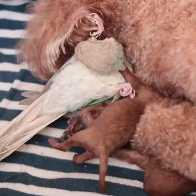 bird, dog, puppy, Video by w.k.lovelybird GIFs