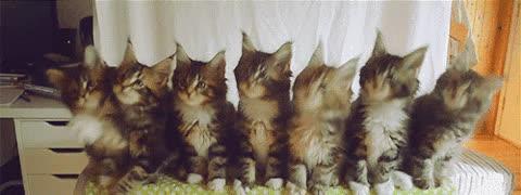 Seven Kittens GIFs