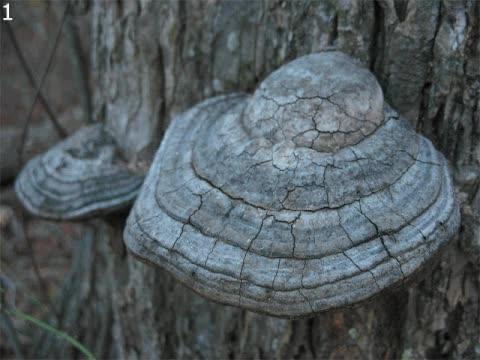 Watch and share Mushroom GIFs on Gfycat