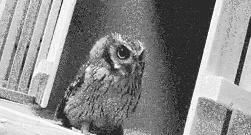 post owl dis door doing UC GIFs