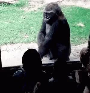Watch and share Ape GIFs on Gfycat