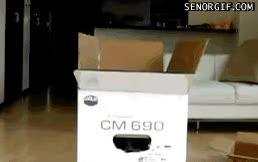 Watch Cat Box GIF on Gfycat. Discover more catconspiracy, catgifs GIFs on Gfycat
