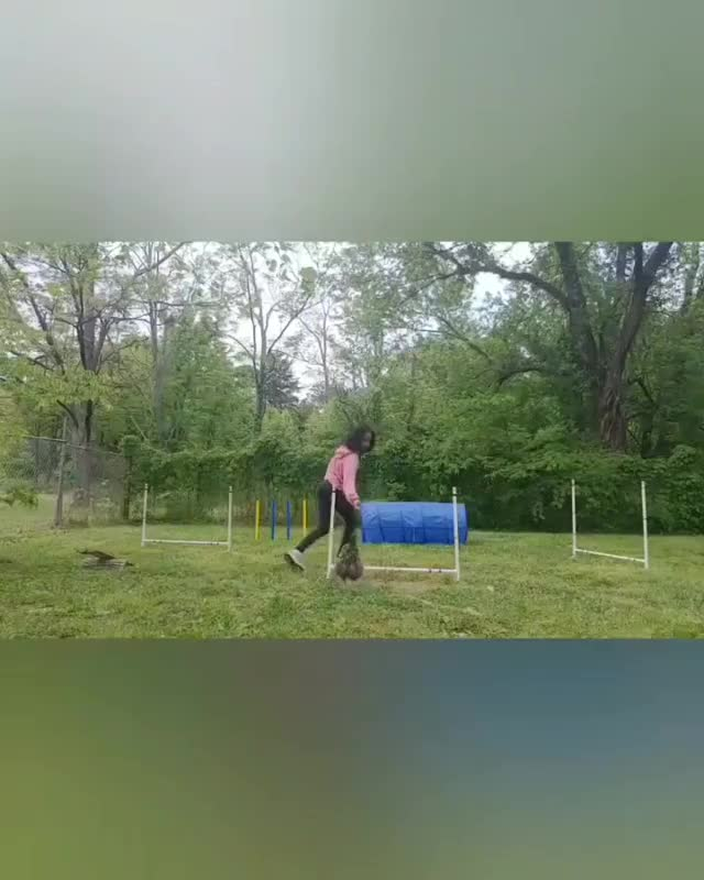Watch and share Agility Training GIFs and Chicken Agility GIFs by lnfinity on Gfycat