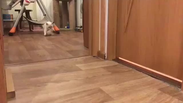 cat, kitten, _But mommy, I still want to play..._ ( 360p ).mp4 GIFs