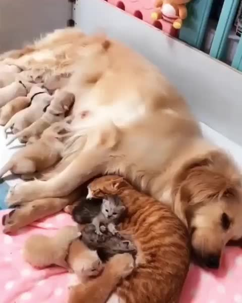 cats, dogs, kittens, meowbox, mommiesofinstagram, puppies, themeowlife, One big happy, blended furmily😻 {courtesy of @wow.cute.dog} GIFs