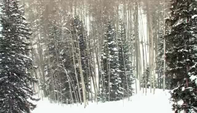Watch and share (HD) Relaxing Snow In Aspen Backyard GIFs on Gfycat