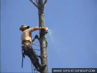 Watch and share Lumberjack Falls Out Of Tree GIFs on Gfycat