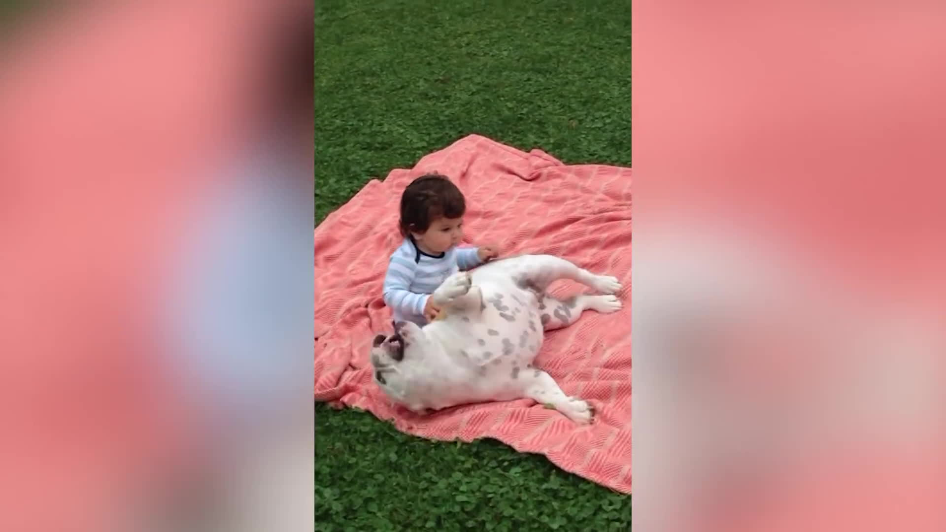 ChildrenFallingOver, funny videos, holdmyjuicebox, Funniest Animal Fails October 2016 Compilation   Funny Pet Videos GIFs