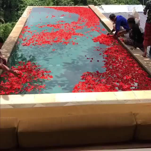 Watch and share The Making Of The Flower 🌺 Pool @villacellabella In Bali GIFs on Gfycat
