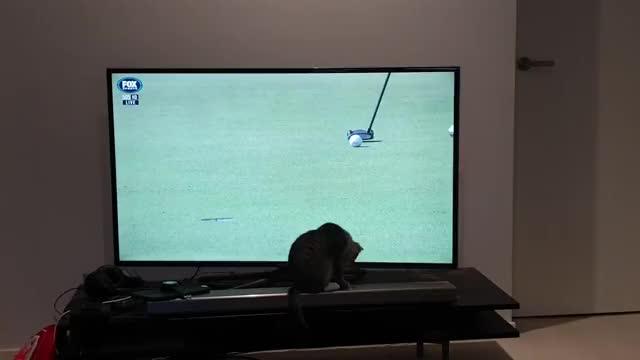 Watch and share Jedi Kitten GIFs by crazydaveyboy on Gfycat