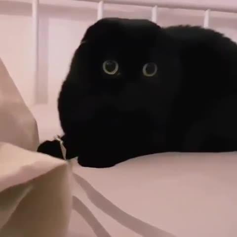 cats, This catnip edible isn't do- GIFs