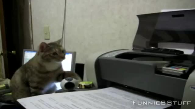 Watch and share Cat Versus Printer GIFs and Cat Vs Hp Deskjet GIFs on Gfycat