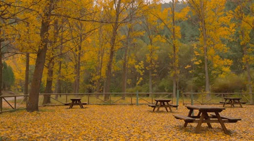 Watch and share Autumn GIFs and Leaves GIFs by gifmeabreak on Gfycat