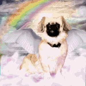 Watch and share Picture Of Haley - We Miss You!!!!!!, A Pekingese Dog On Dogster GIFs on Gfycat