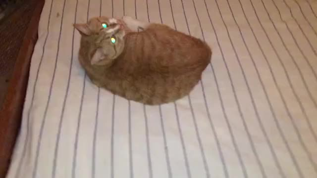 Cat dance piano tutorial