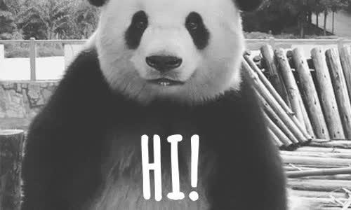 hi,  GIFs