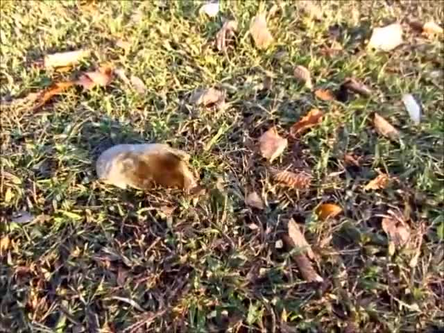 Watch and share Watch A Live Mole Dig His Way To Freedom GIFs on Gfycat