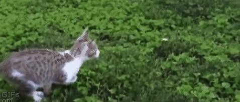 michaelbaygifs, Cat Rage GIFs